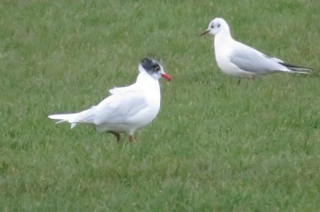 06feb17-med-gull-acq-sum-plum-rest-bay2