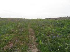 11May17 Bluebells near Sker Farm