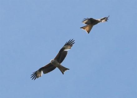 IMG_5437 two kites