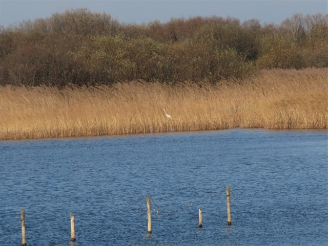 22Nov18Great White Egret Kenfig Pool me and PB